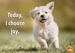 "Happy puppy with quote ""Today, I choose joy."""